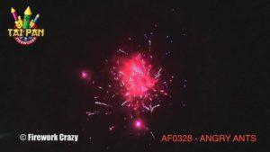 angry ants tai pan fireworks