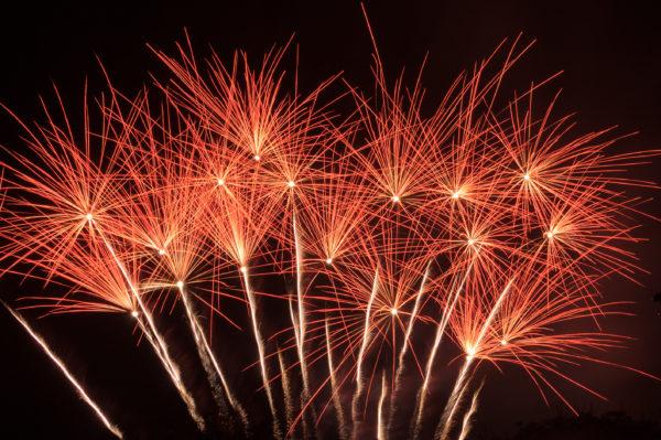 exploding flower bed fireworks